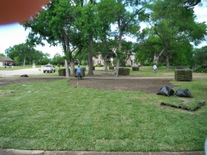 Lawn renovation from Bermuda to shad tolerant St. Augustine