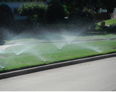 A strong, weed free turf is no accident!  Prepare the lawn now for spring green up and the drought days to come.