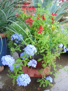 Blues and reds are a pretty combination for patio pots